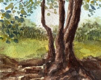 Shade in the Australian Bush, Miniature Watercolour Painting, Original Artwork