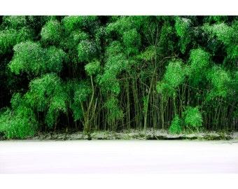 Winter Bamboo
