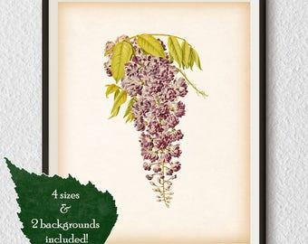 Wisteria, Vintage wisteria print, Floral art, Flower 8x10 print, Flower 11x14 print, Instant download printable art, Antique wall art  #91