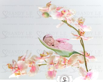 Newborn Pink Orchids Floral Landscape Digital Backdrop