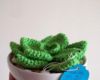 Crochet Succulent