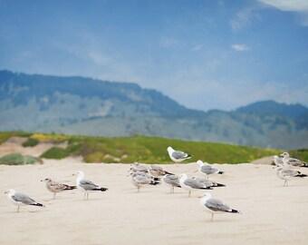 Seagulls on Beach Photograph, Beach,  Prints and Canvas available, Home Decor, Art, Large Art,