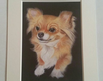 Chihuahua  art print from original artwork by Sarah Emmens