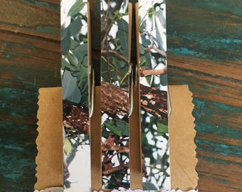 Eucalyptus Leaves & Branches on Peg Fridge Magnets (one-of-a-kind)