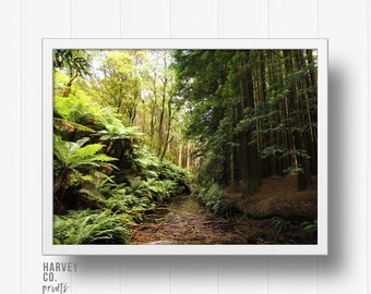 Photography, Nature, Forest, Digital Print, Digital Download, Woodland, Travel, Trees, Ferns, Landscape photography