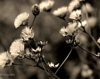 Flower Nature Photography | Sepia Print | # 5 of 5