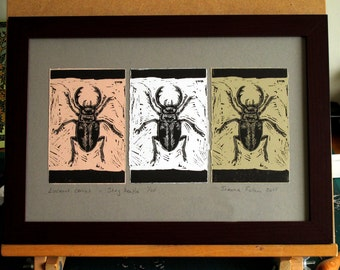 Great British Beetle, stag beetles,