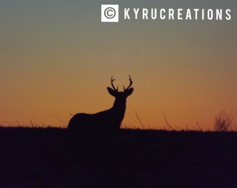 Buck at Sunset