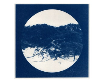 A natural history / has natural hi story (Chapter 1: plants, seedlings) - original - #06 Cyanotype