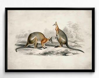 Kangaroo Australia Vintage Print - Kangaroo Poster - Kangaroo Art - Living Room Decor - Living Room Art - Nursery Decor - Orbigny