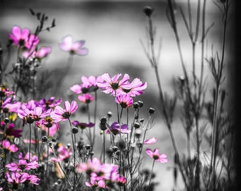 Pink Flower Photo, Field of Flowers Photo, Flower Photograph, Digital Flowers, Wall Art,