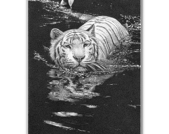 White tiger print picture snow tigers wildlife big cats wall art animal sketch b/w fine art graphite pencil drawing signed limited edition