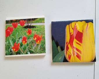 Tulip Coasters (set of 4)