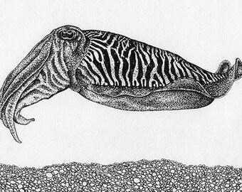 Cuttlefish Mini Print