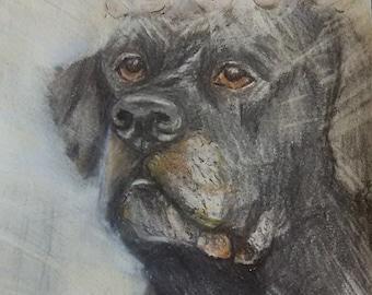 Customed Memorial Pet Portrait