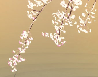Cherry Blossoms and Fish