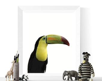 50% OFF Sale - Bird Prints | Toucan Printable | Nursery Art | Bird Art | Instant Download | Toucan Art | Photograph Prints | Home Decor