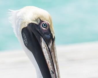 The Pelican, Fine Art Matte Print, Pelican Photography, Bird Photography, Nautical Decor