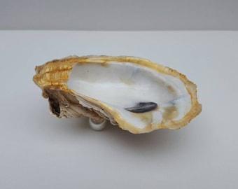 Gold Rimmed Oyster Ring or Trinket Dish item GP01