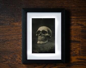 Handmade Wet Plate Collodion Skull Wall Art