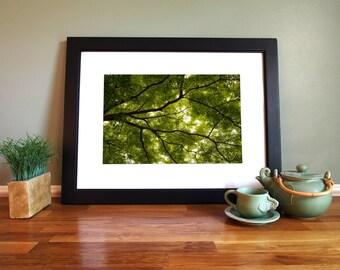 Tree Canopy Giclée Print