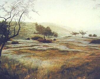 Olive trees - Mount Horshan