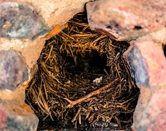 "Birds Nest In Nature Art Print Entitled ""To Build A Home"". Wall Decor, Photography"