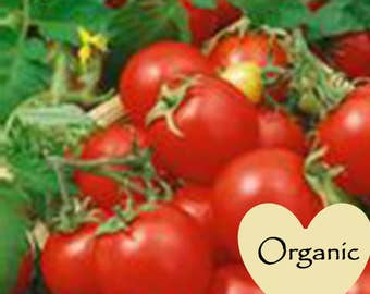 Amazoncom  Heirloom Organic NonGMO Garden Seeds