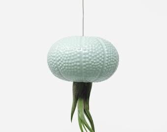 Hanging Green Jellyfish Air Plant Sea Urchin