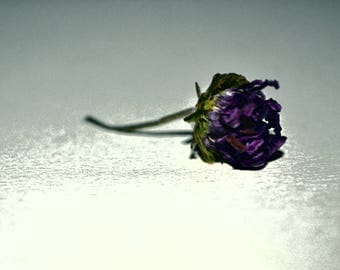 Dried Flower Fine Art Photography