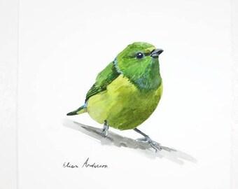 ORIGINAL watercolor painting, Green bird watercolor, Baby Nursery, Wall Art, Wall Decoration, Cute bird, Bird painting, Bird watercolor