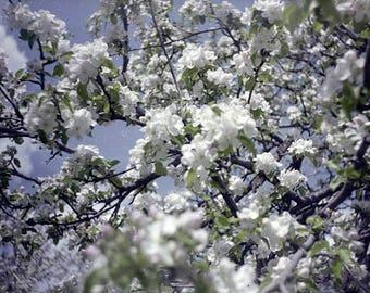 Flowers lomo photo