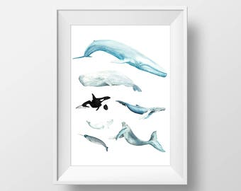 Watercolor Whales Large Archival Art Print, Assorted Whale Species, Orca, Blue Whale, Sperm Whale, Humpback Whale, Narwhal, Beluga