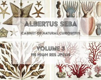 Contemporary Cabinet Of Natural Curiosities Wallpaper Vintage Animal And Sea Life Images On Decor