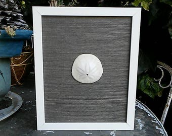 Single sand dollar on grasscloth in frame
