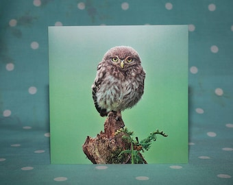 Baby Little Owl Greetings Card