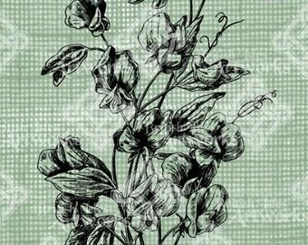 Digital Download, Sweet Pea Flowers, Antique Illustration, Iron on Transfer, DigiStamp, Transparent png
