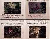 50 photo slides - FLOWERS - nature - garden - floral 35mm film slides - flora - scientific names