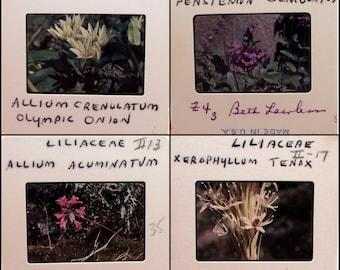 50 photo slides - FLOWERS - nature - garden - floral 35mm film slides - flora - scientific names