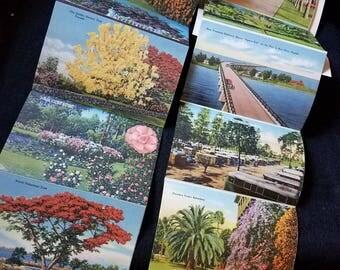 Pair/Florida/Souvenir/Illustrations/1940s/Linen