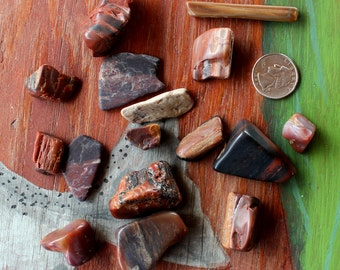 6 oz. lot of tumbled petrified wood pieces red and black for display and curiosity cabinets
