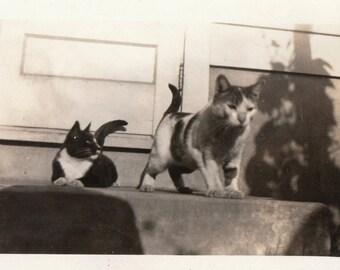 Original Vintage Photograph Snapshot Cats on Step 1930s-40s