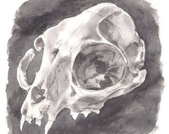 Raccoon Skull Watercolour Art Print