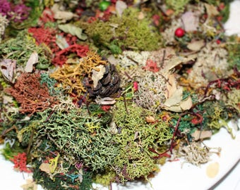 Lichen potpourri-Lichen Confetti-3 oz sandwich bag full-Preserved Reindeer moss -dried botanicals-preserved mood moss-dried leaves and more