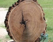 "Large Wood Round, extra large wood slice, tree slice with bark, rustic centerpiece, woodland cake base,  21"" wide x 2"" thick, Texas mesquite"
