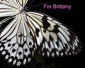 For Brittany : Custom Created Butterfly Mobile