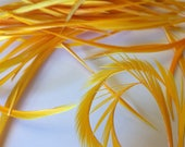 20 Pieces Premium golden yellow Biot Goose Feathers Great for Crafts