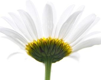 Daisy Photography, Daisy Art Print, White Flower Photography, White Flowers, White Daisy Photo, Daisy Wall Art, Flower Wall Art, Modern Art