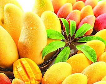 Mango Mania Scented Products Shower Gel, Whipped Body Butter, Lotion, Body Spray, Bath Soak, Shampoo or Conditioner