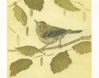 Ruby-crowned Kinglet, Fine Art Etching